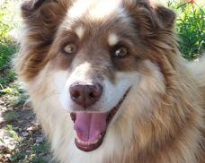 Available Pets Heartland Humane Society